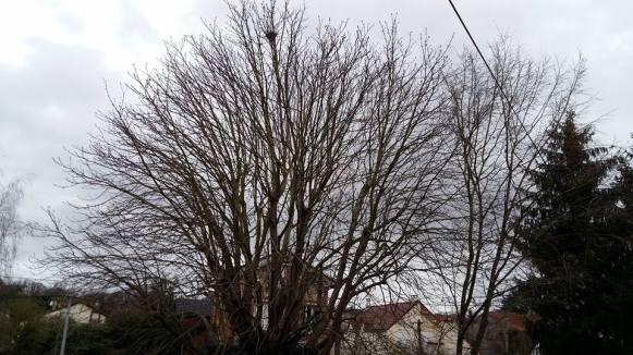 170321 Le Renouveau - Le ciel avec le marronnier le 21-03-17 matin