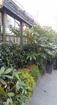 170329 La Closerie des Lilas - Les arbustes sur le bld du Montparnasse