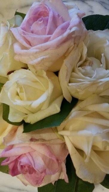 20170318 Photo roses offertes par Olivier à Bathilde retour clinique le 18-03-17 1