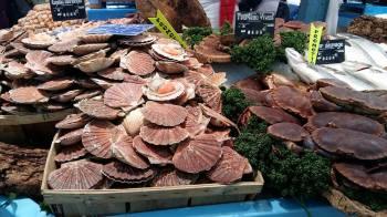Marché de Maisons-Laffitte - Etalage de coquilles st jacques et poisson - le 11-03-17