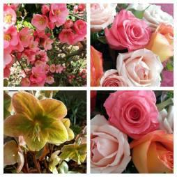 170521 Mai joli mois de mai collage de 4 fleurs