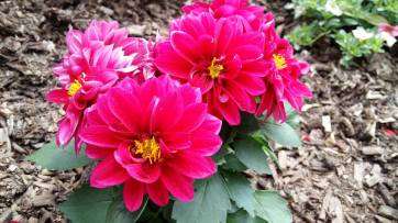 170523 Le fleur sur mon chemin