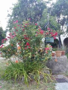 170612 La consolation le jardin 1