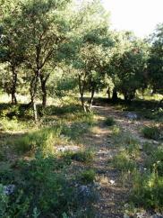 170612 La Provence 12