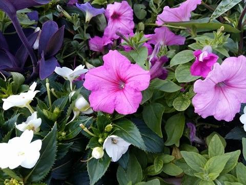 170620 Le Printemps - fleurs et feuilles roses
