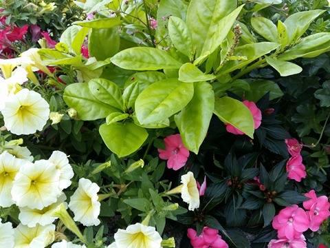 170620 Le Printemps - fleurs et feuilles