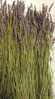 170625 Brassée de fleurs de lavande