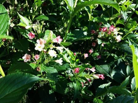 170709 Fleurs 3