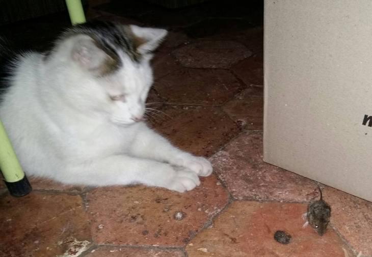 170813 Pacha le chat et un souris