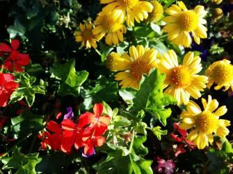 170814 Fleurs jaune et rouge