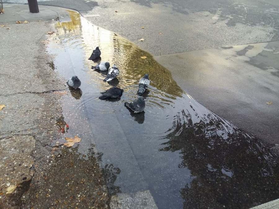 « Changement de programme »                     « Pigeons à l'heure de la baignade»