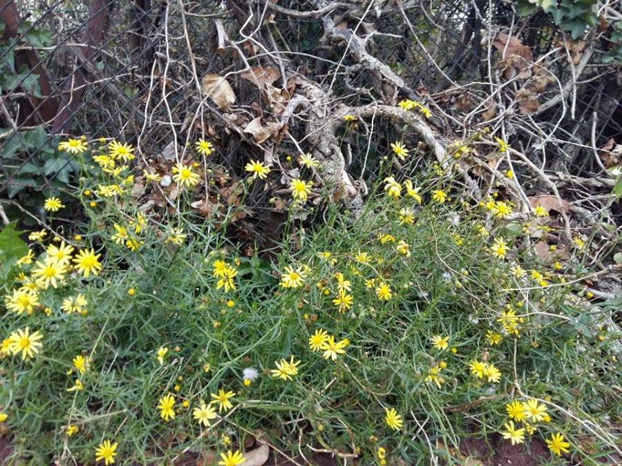 « Un air de printemps à la Saint Hubert»