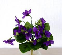 180123 bouquet de violettes