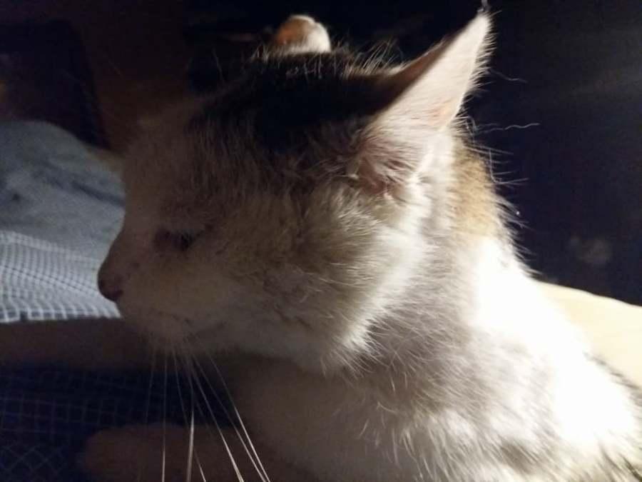 « Pacha, un amour de chat ou L'indépendant, bien dépendant !»