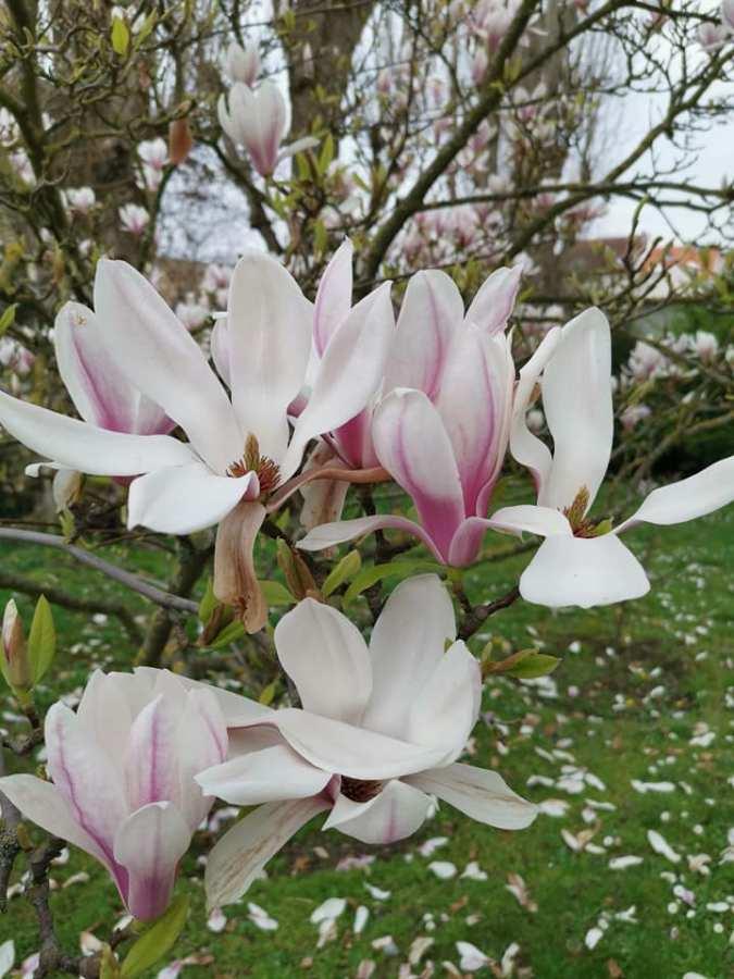 C'est le printemps et plus encore!